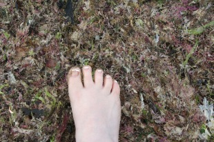 The seaweed was VERY colorful. (and funky to step on!)