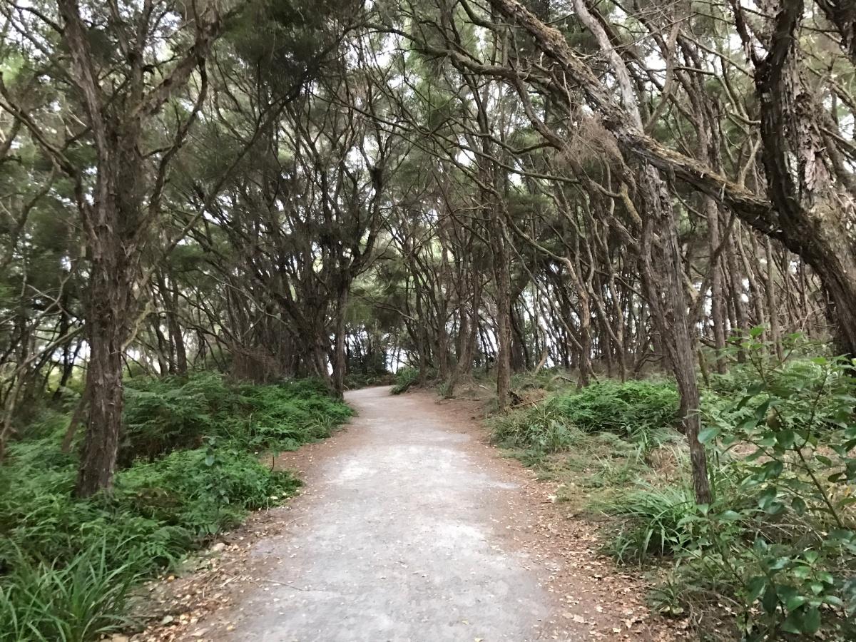 Rainy Rotorua
