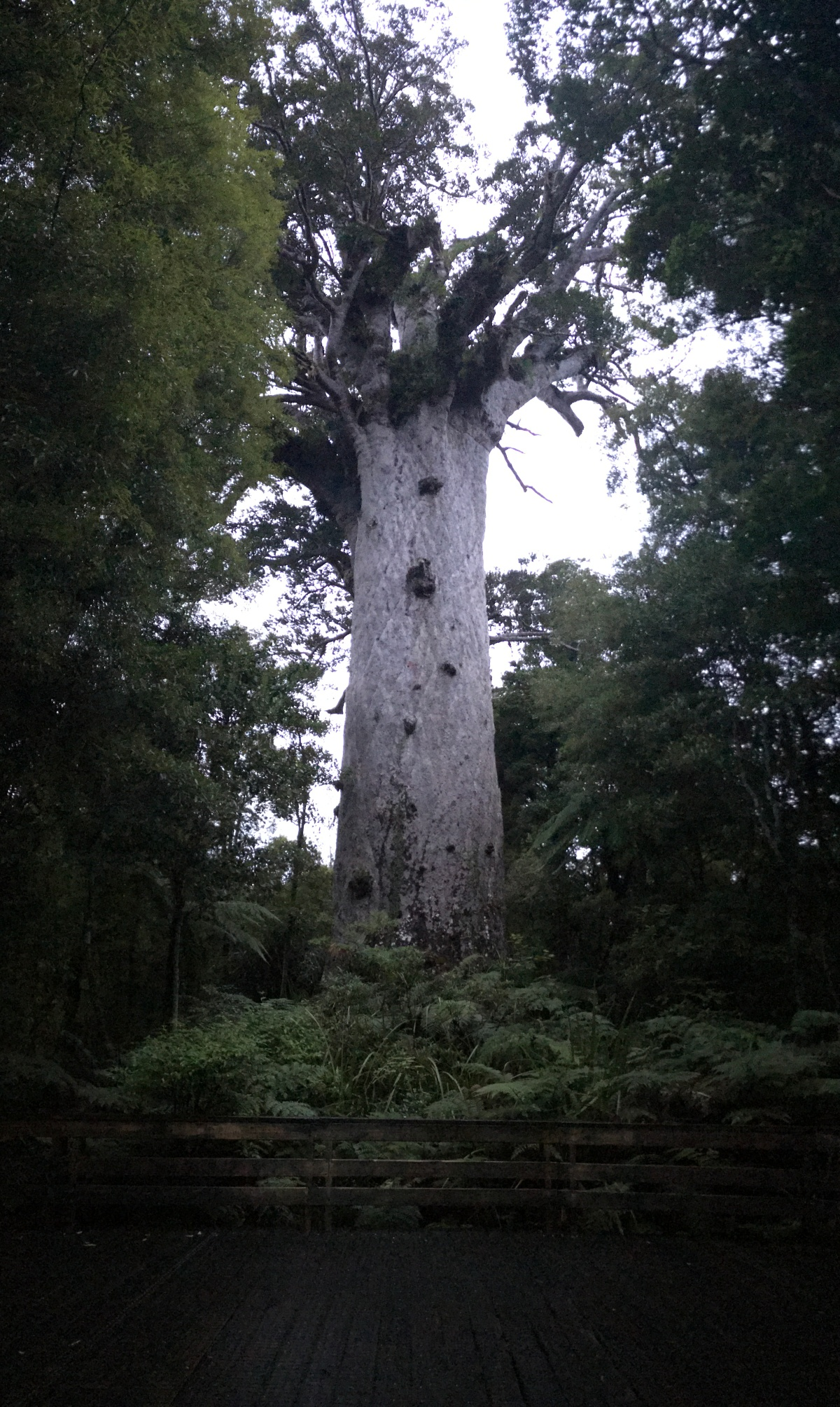 Day 8 and 9 – History, Culture and Giant Trees in the Northland